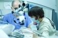 Inglot Implantologia i Stomatologia Estetyczna